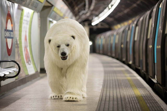 polar-bear-in-london2.jpg