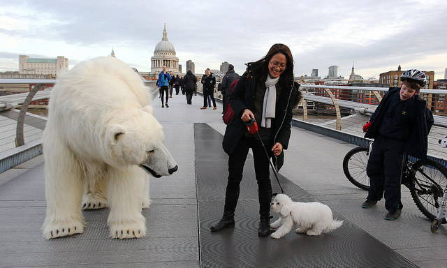 polar-bear-in-london3.jpg